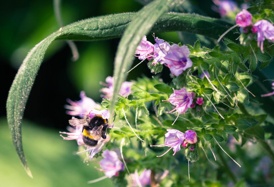garden-open-days-bee
