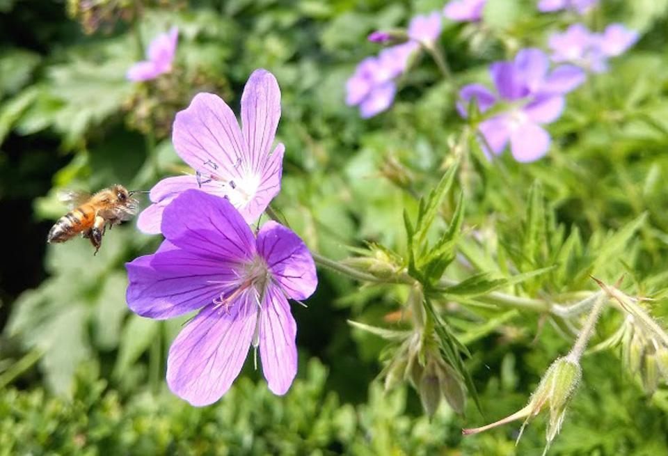 garden-open-days-flower